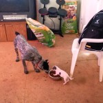 Archive Footage: Scenes Of An Easter Dinner From A Dog Eat Dog World (Video)