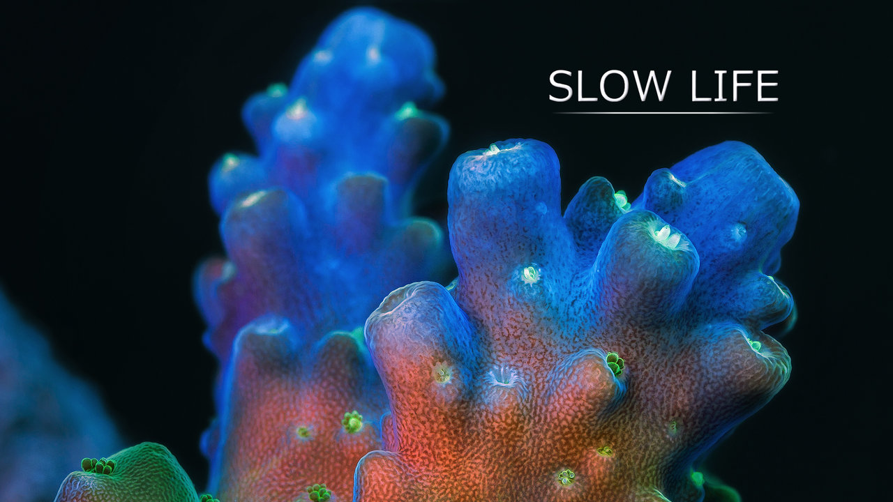 Awesome Time Lapse Video Material Of Corals And Sponges Is Awesome!