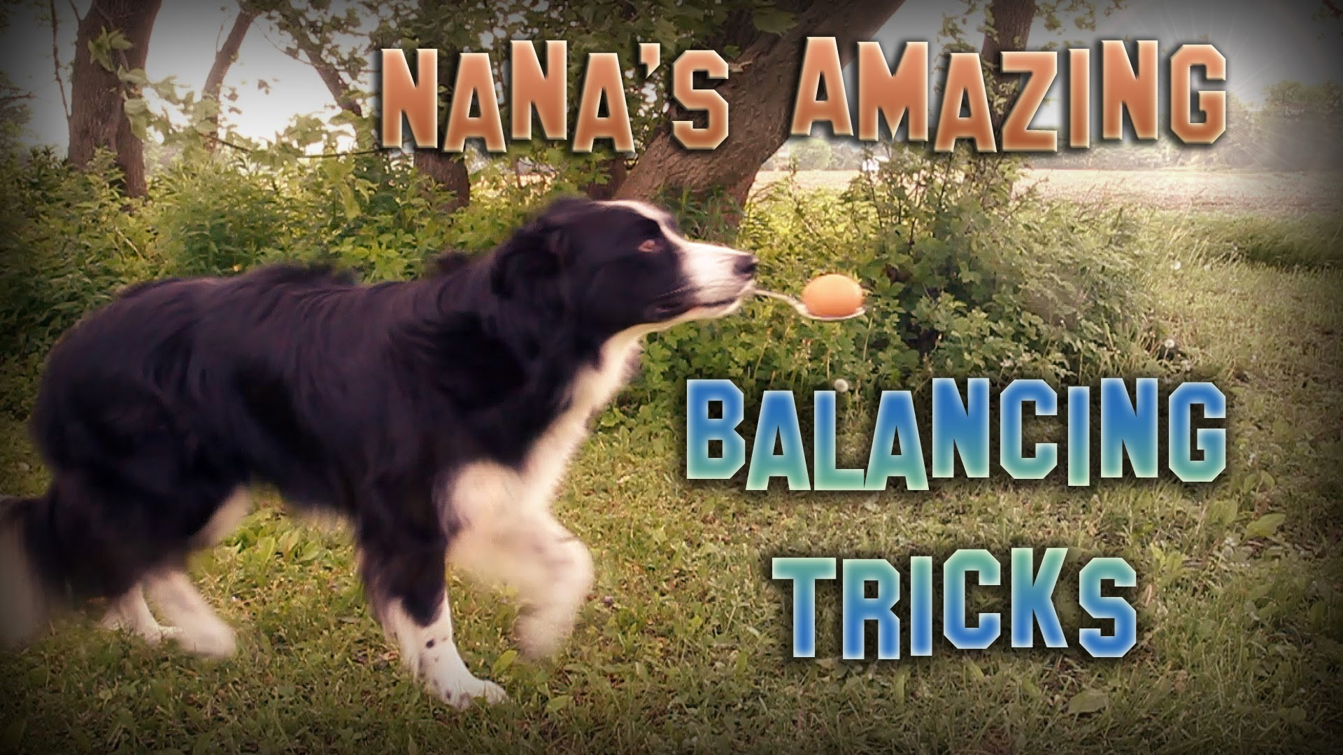 Border Collie Balances Like A Boss (Video)