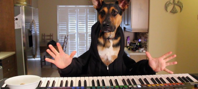 Dog Enjoys A Snack While Playing A Waltz On The Piano (Video)