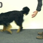 Dogs Reacting To Magic (Video)