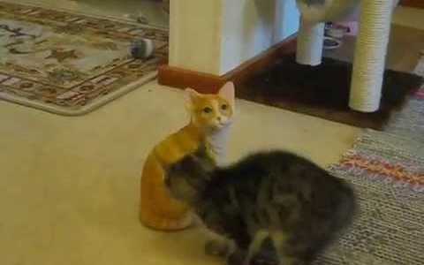 Kitten Kung Fu Attacks The Sh!t Out Of A Ceramic Cat (Video)