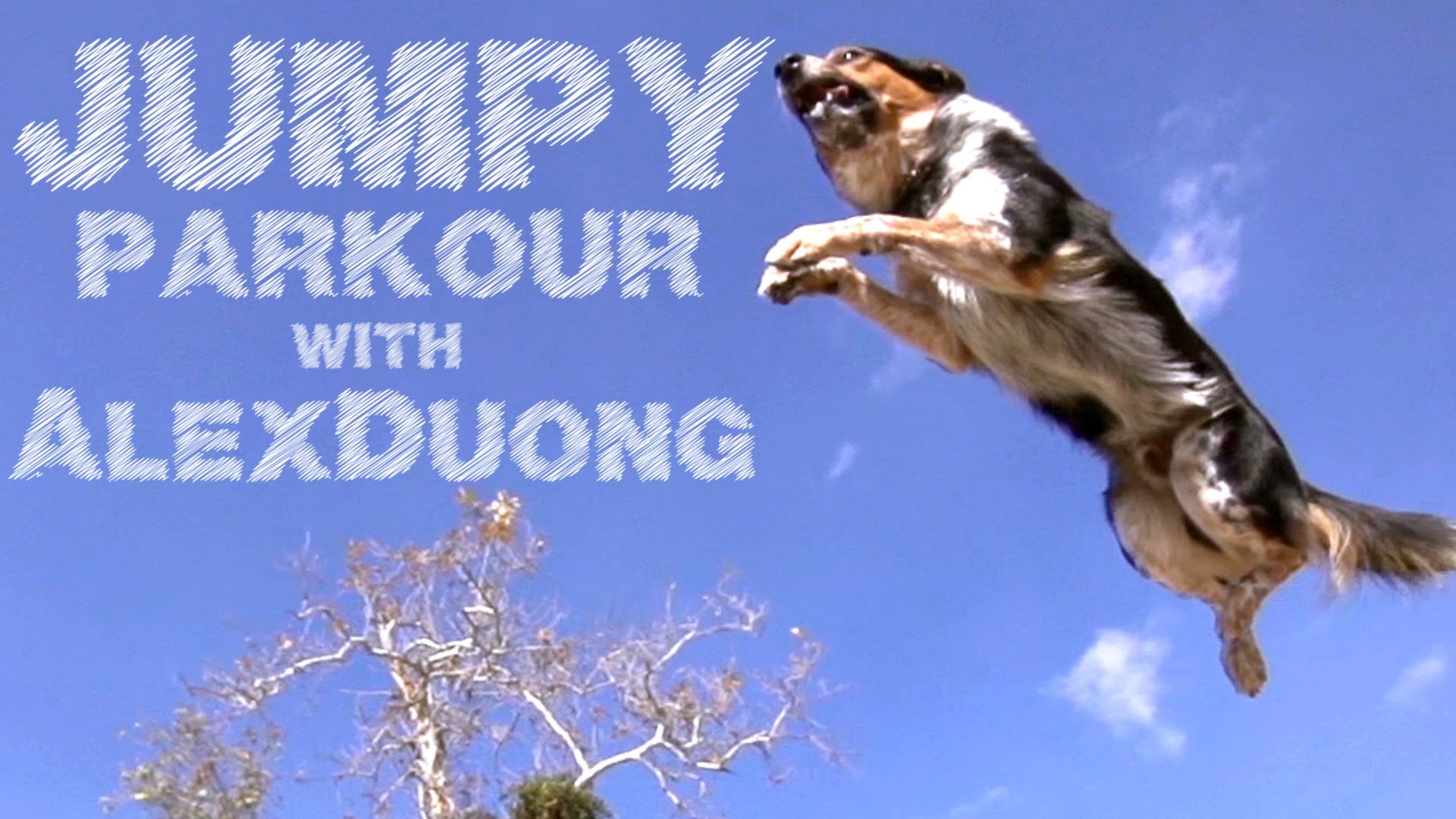 Parkour Dog Does Backflips, Walks On His Front Paws, And Other Incredible Acrobatics (Video)