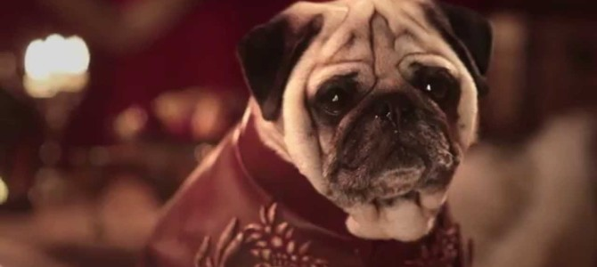 The Pugs Of Westeros: A Game Of Thrones Parody With Pugs