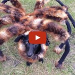 Spiderdog: Dog Scares The Sh!T Out Of People In A Spider Costume