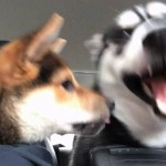 Two Of The Most Annoying Dogs In The History Of Dogkind (Videos)